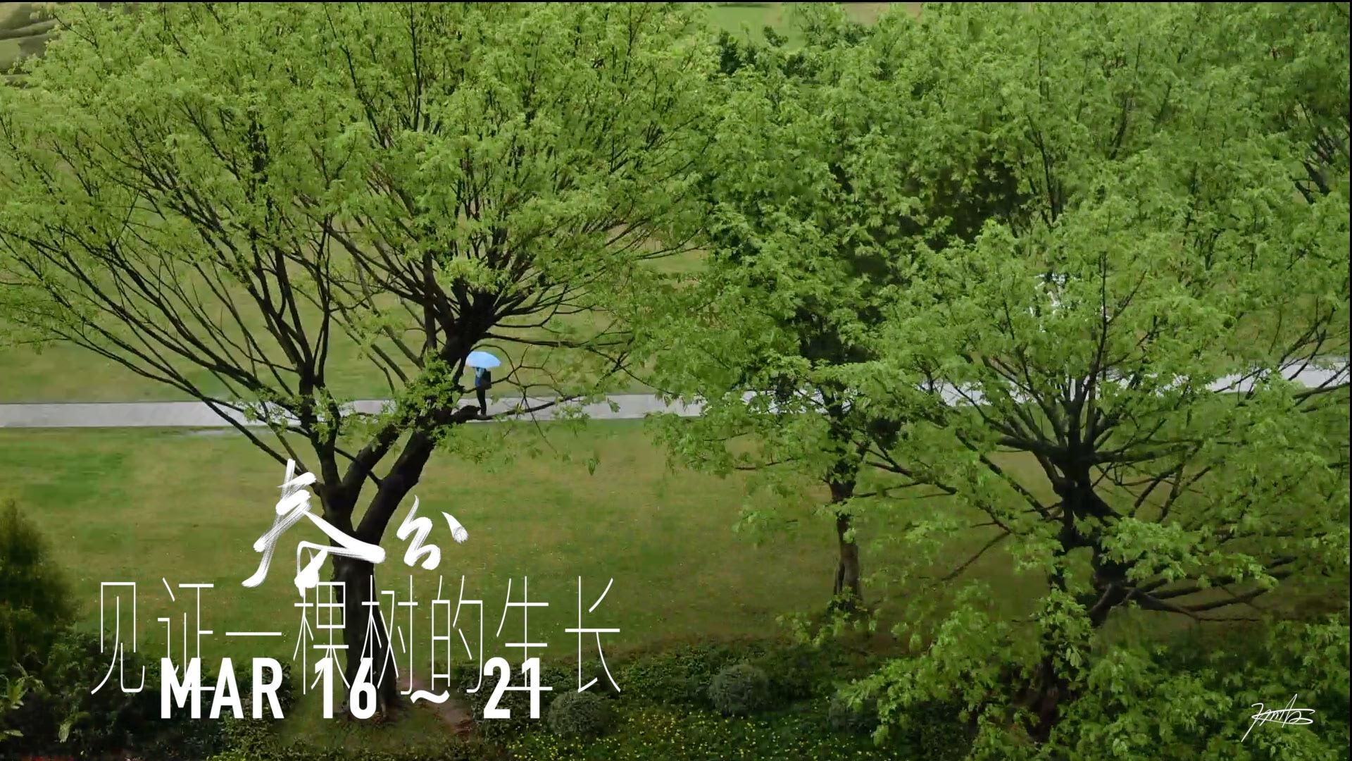 2020 tree growing