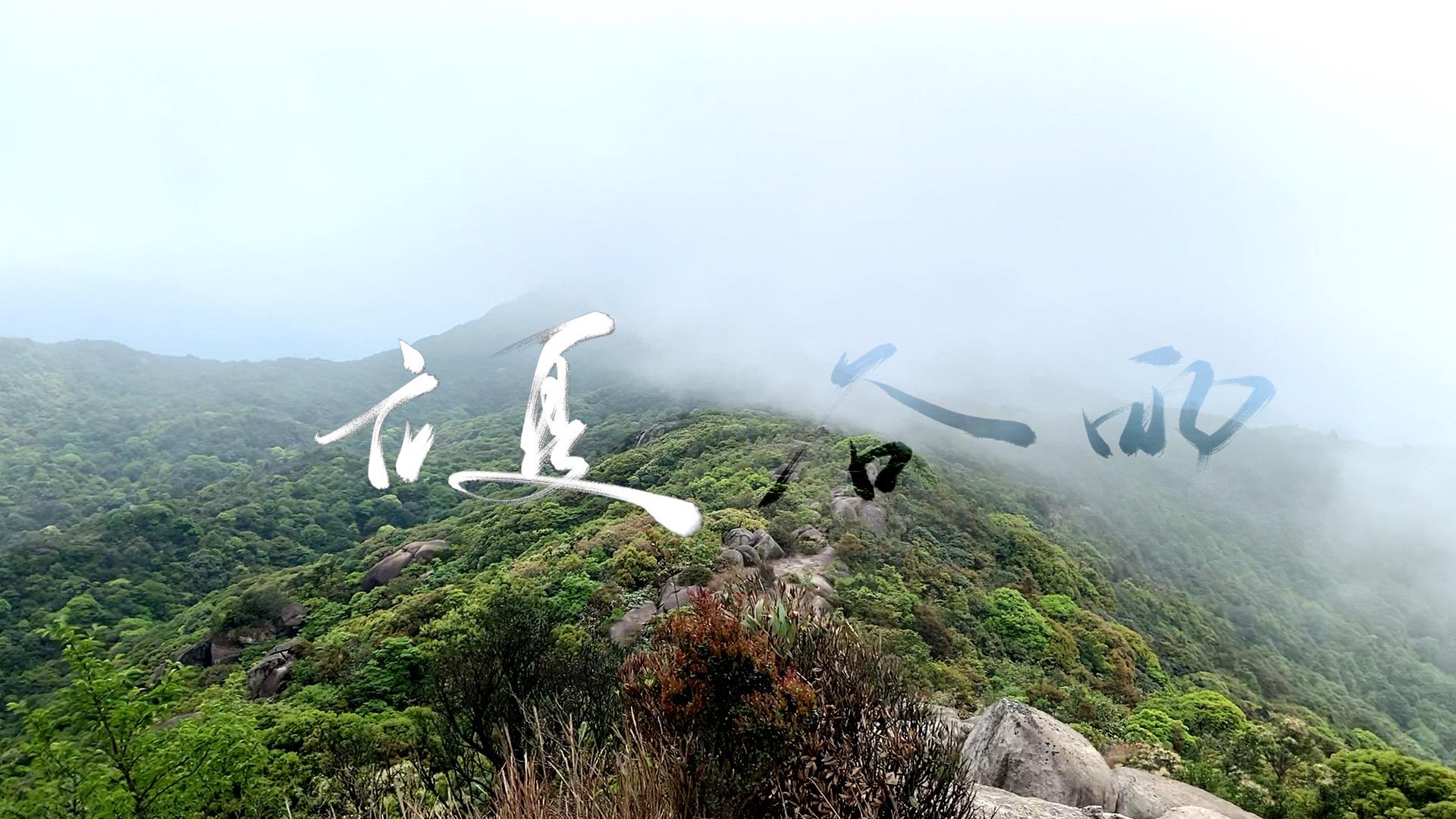 2020 mountain fog